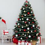 C) É um pinheiro plantado que eu posso manter na minha casa depois do Natal